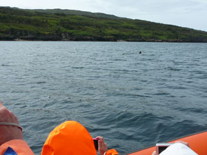 Amazing dolphin and wale spotting on the coast of Scotland